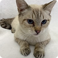 Adopt A Pet :: Griswold - Mission Viejo, CA