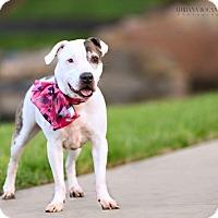 Adopt A Pet :: Nichie - Charlotte, NC