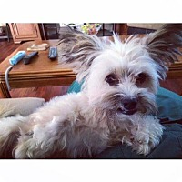 Adopt A Pet :: LEVI (CP JW) - Tampa, FL