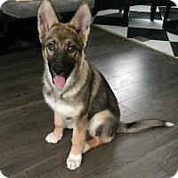 Adopt A Pet :: Cookie - Saskatoon, SK