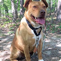 Adopt A Pet :: Rocky - Harrisonburg, VA
