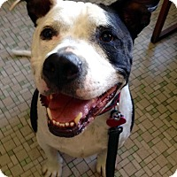 Adopt A Pet :: Romeo - Seattle, WA