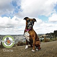 Adopt A Pet :: Gracie - Oceanside, CA