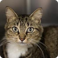 Adopt A Pet :: Bridget Jones - Bradenton, FL