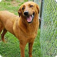 Adopt A Pet :: Molly - Towson, MD