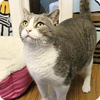 Adopt A Pet :: Stetson - West Des Moines, IA