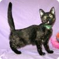 Adopt A Pet :: Ladonna - Powell, OH