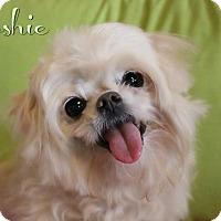 Adopt A Pet :: Joshie - Benton, LA