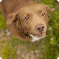 Adopt A Pet :: Tania - Harvard, IL