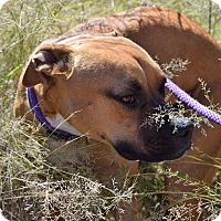 Adopt A Pet :: Rousy - Sierra Vista, AZ