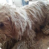 Adopt A Pet :: Bear - Apple Valley, UT