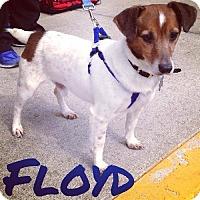 Adopt A Pet :: Floyd - Fairfield, OH