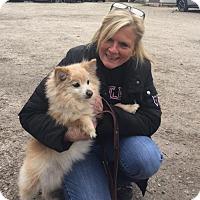 Adopt A Pet :: Kojack - Northbrook, IL