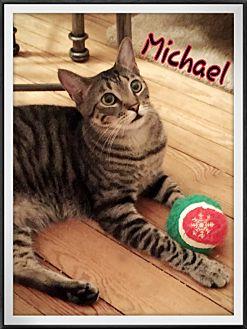 Domestic Shorthair Cat for adoption in New York, New York - Michael