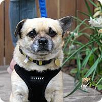 Adopt A Pet :: Chubbs - Los Angeles, CA