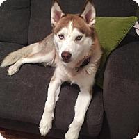 Adopt A Pet :: Juno - Columbus, IN