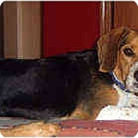 Adopt A Pet :: Rosko - Novi, MI