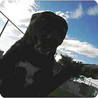 Adopt A Pet :: Bronx - Meridian, ID