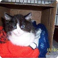 Adopt A Pet :: Justin - Island Park, NY