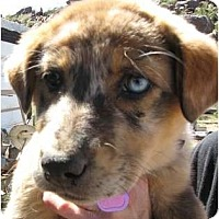 Adopt A Pet :: Lexi - Golden Valley, AZ