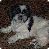 Adopt A Pet :: Sammie - Denver, CO