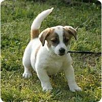 Adopt A Pet :: Avery - Staunton, VA