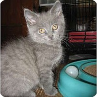 Adopt A Pet :: Gavin - Portland, ME