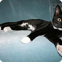 Adopt A Pet :: Mackenzie - Alexandria, VA