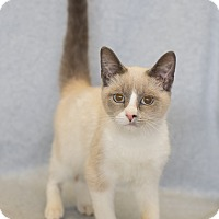 Adopt A Pet :: Harry - Fort Collins, CO