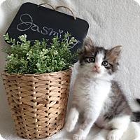 Adopt A Pet :: Jasmine - Coral Springs, FL