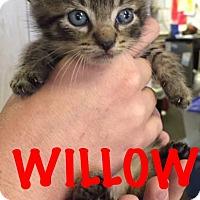 Adopt A Pet :: Willow - Waycross, GA