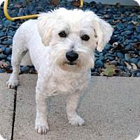Adopt A Pet :: Ben-Pending Adoption - Omaha, NE