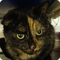 Adopt A Pet :: Cookie - Elyria, OH