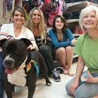 Adopt A Pet :: Hugo - Livonia, MI