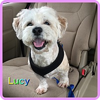 Adopt A Pet :: Lucy - Hollywood, FL
