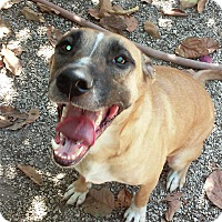 Adopt A Pet :: Blondie - Miami, FL