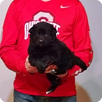 Adopt A Pet :: Romeo - Lakewood, OH