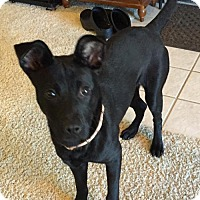 Adopt A Pet :: Coco - Irving, TX