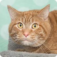 Adopt A Pet :: Orin - Chippewa Falls, WI