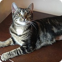 Adopt A Pet :: Sassy Sylvia! - Brooklyn, NY