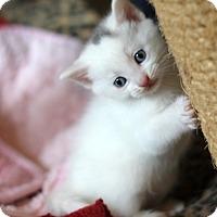 Adopt A Pet :: Curly - Dalton, GA