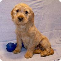 Adopt A Pet :: 16-d05-017 Eli - Fayetteville, TN