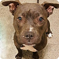 Adopt A Pet :: Hattie - Berkeley, CA