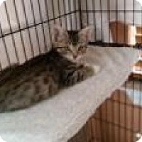 Adopt A Pet :: Julia  (sonnys kittens) - Medford, NJ