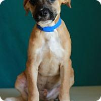 Adopt A Pet :: Rosco - Waldorf, MD