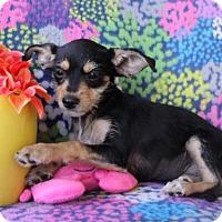 Adopt A Pet :: Audrey - Phoenix, AZ