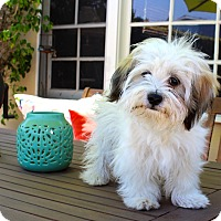 Adopt A Pet :: Mr. Pettybone - Los Angeles, CA