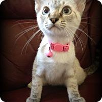 Adopt A Pet :: Azul - San Ysidro, CA