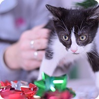 Adopt A Pet :: Trixie - Virginia Beach, VA