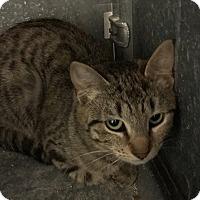 Adopt A Pet :: Snooky - Loogootee, IN